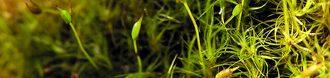 cropped-moss-1507430.jpg